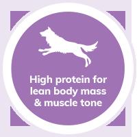 dog-high-protein